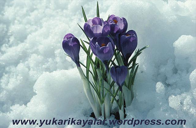 20120603_194237 copy.jpg666 (3)
