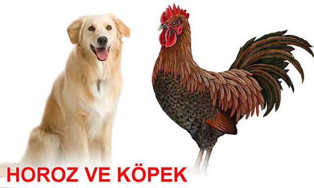 Horoz İle Köpeğin Konuşması,horoz-kopek