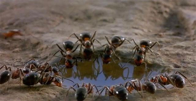 Karınca İle H.z. Süleyman  (a.s)