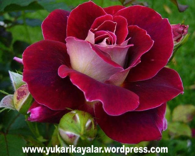 Sümeyye Hatun (radıyallahü anhâ) -İlk kadın şehit,Resulullahın (s.a.v.) Bazı Duâları.