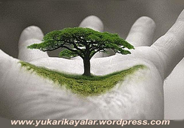 20120603_194237 copy.jpghhh.jpgnn