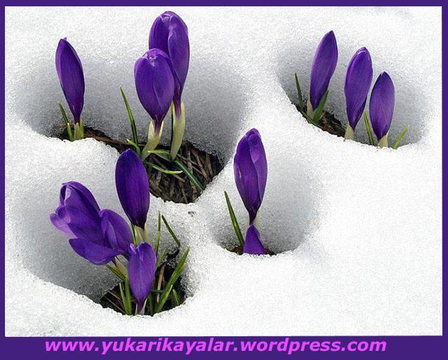 Bayezid-i Bestami,Halvetiyye tarikatı Nedir