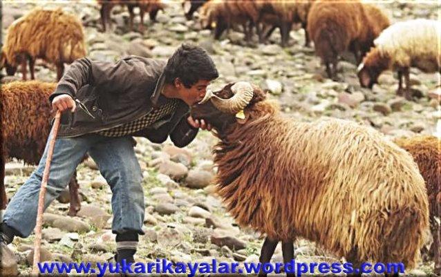 Abdullah bin Mübarek,Allahi bilirmisin,Allah kactir,çoban