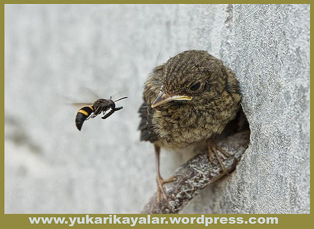 Böceğin Rızkı,kimse-kimsenin-rc4b1zkc4b1nc4b1-yiyemez