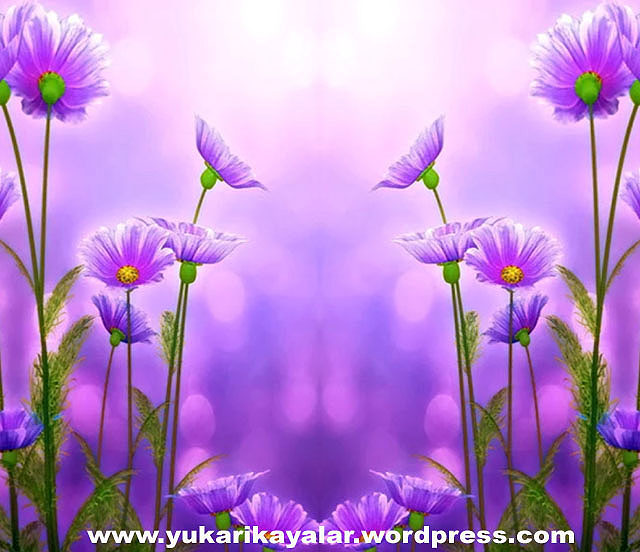 20120603_194237-copy-jpghj-jpgyy