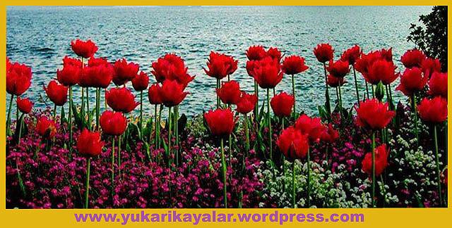 20120603_194237 copy.jpg57