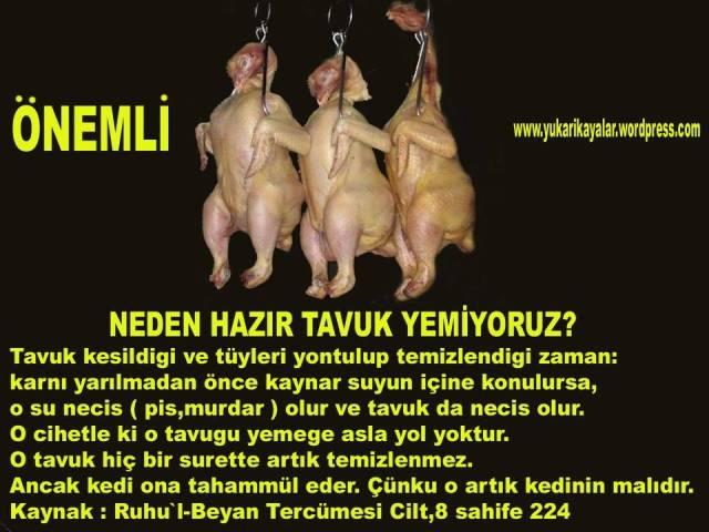 Tavuk,tavuk harammi,tavuk nasil, tavuk kaynatilirmi haram,tavuk haram,Tüylerinin kolay yolunması için kesilen tavuklar sıcak suya bırakılıyor. Böyle tavukları yemek caiz midir
