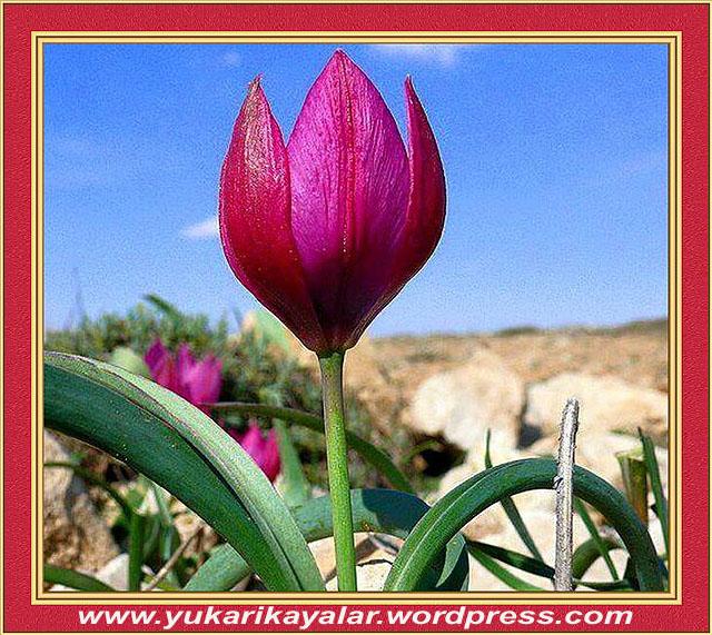 12H.z. İsa'nın Babasız Doğma Mûcizesi,Harun resit,dini hikayeler, (2)