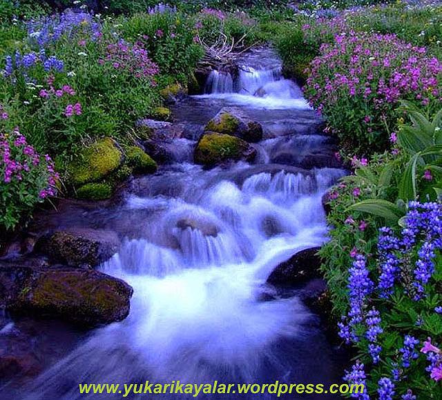 16,Cennet,Kevser Havzı`nın Mizan`ın Ve Sırat Köprüsü`nün Evsafı,Hazreti Havva'nın Yaratılışı