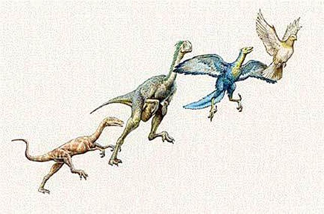 Darwin Ve Evrim Teorisi,kuslarin-evrimi