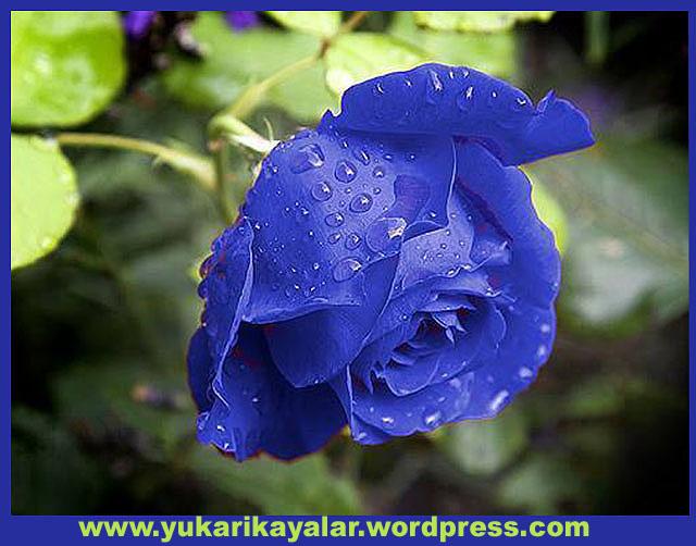 20120603_194237 copy.jpgfty