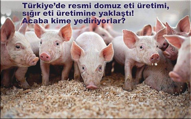 Türkiye'de resmi domuz eti üretimi, sığır eti üretimine yaklaştı