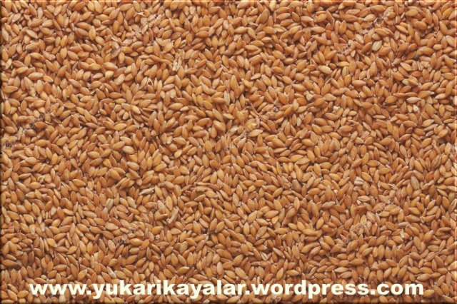 Buğday Tanesi,Adem aleyhisselam,Adem a.s.jpg