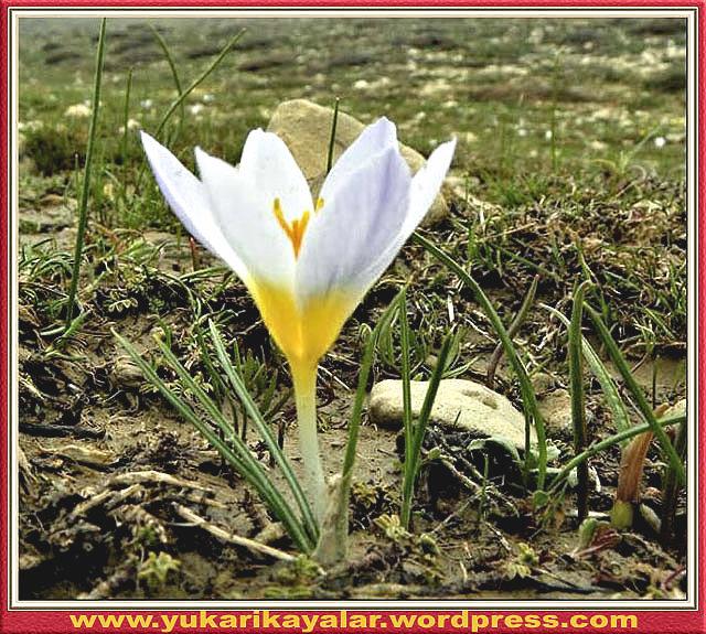 Kadın hakları ve sözde - Batı uygarlığı,H.z. Şuayb (a.s),Saglık,Tevekkül,Peygamberimiz,Suleyman hilmi tunahan.Allah'tan Başkasının Adına Yemin
