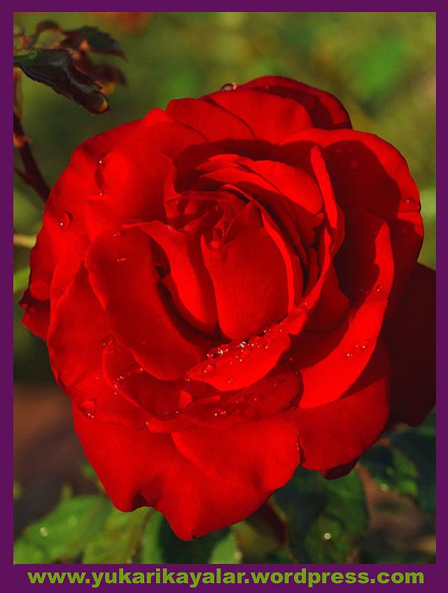 20120603_194237 copy.jpg123