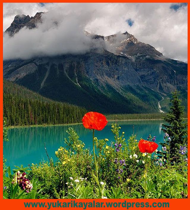 Kıyamet gününde cennete ilk davet edilenler, kıvançta ve tasada Allah'a hamd edenler olacaktır.