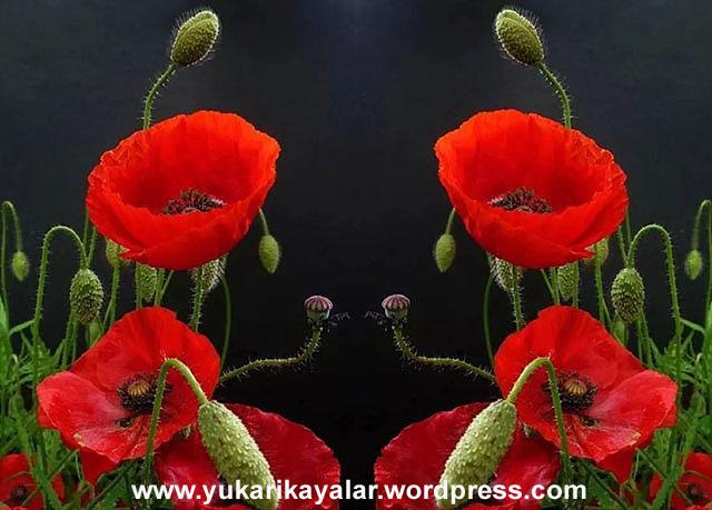 20120603_194237 copy.jpgfffff