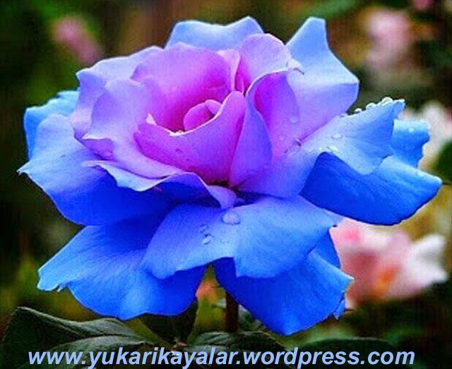 20120603_194237 copy.jpgmm.jpgvb
