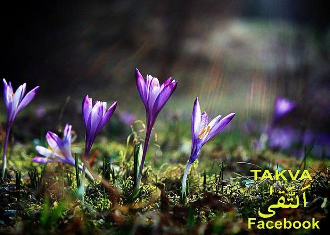 Cennet nimetlerinin çeşitleri ve Cennetlerde bulunan huri ve gılmanlar,goynem,beysehir,sennet,ibrahim hakki hazretleri,takva,facebook,