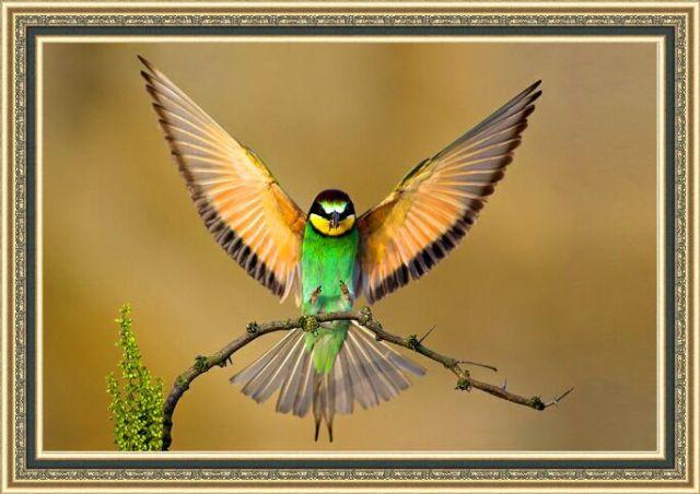 Kafeste Kuş Beslemek,kafestekusbeslemek