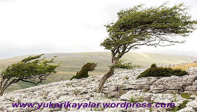 Rüzgârların Çeşitleri Ve İsimleri