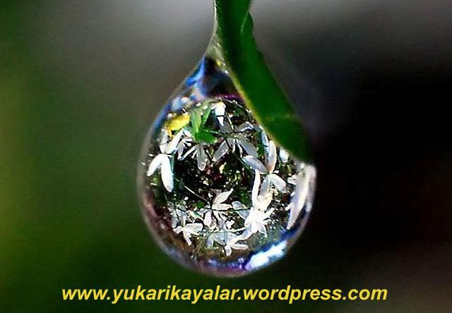 Ab-ı Hayat suyu,ab-i hayat copy