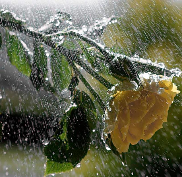 Nisan Yağmuru Nelere Şifalıdır