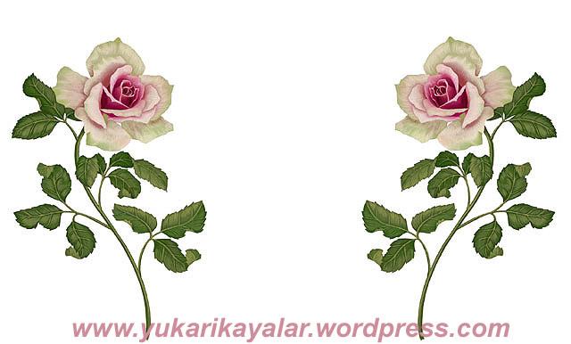 20120603_19423u7-copy
