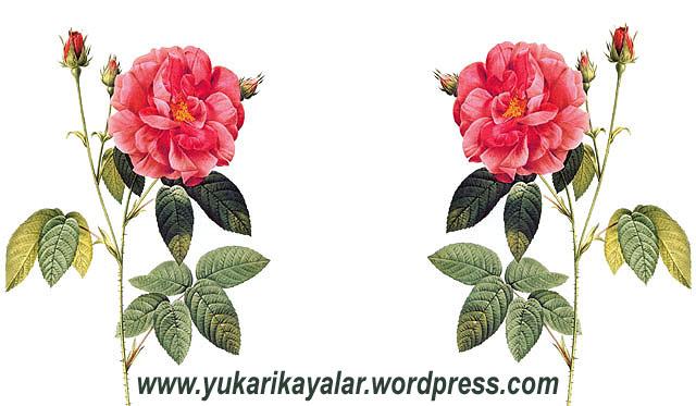 20120603_di194237-copy