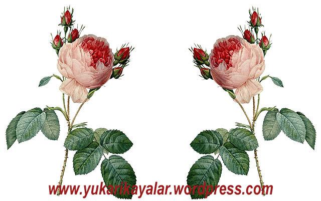 20120603_1xg94237-copy