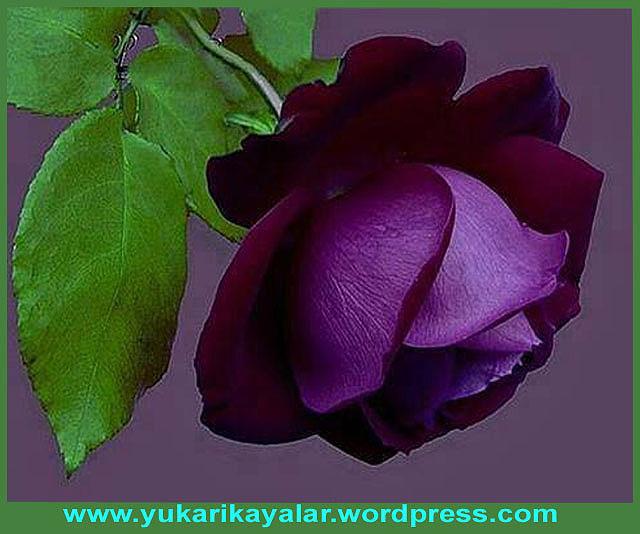 Selmân-ı Farisî (r.a.) Hazretleri
