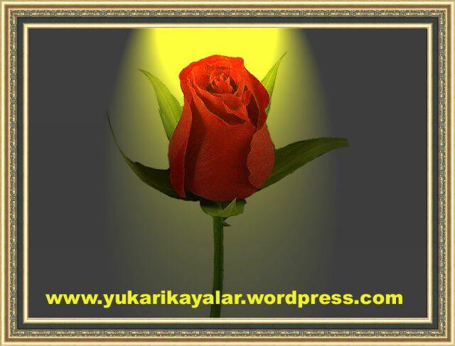Kadın ve Dua,gul,cicek,Peygamberimizin mucizeleri