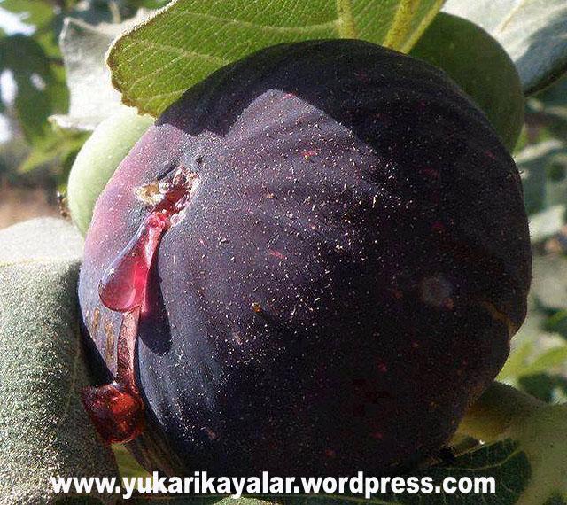 Kaynak 365 Gün dua – Mehmet Oruç