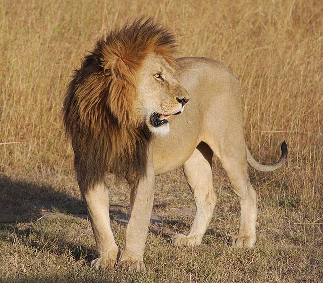 Aslanların önüne atıllan Zahid - Hikâye