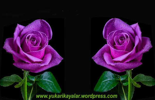 20120603_194237 copy.jpg111 (2)