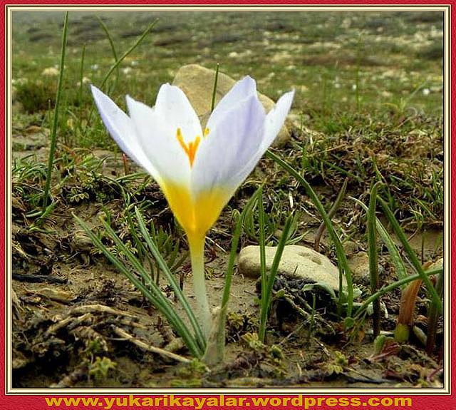Saglık,Peygamberimiz,Suleyman hilmi tunahan.Allah'tan Başkasının Adına Yemin