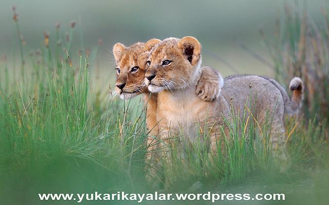 Hayvanlar da insanlar gibi birer ümmettirler.