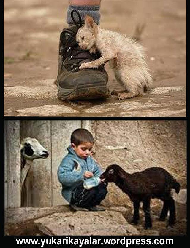 Hayvanlara merhamet