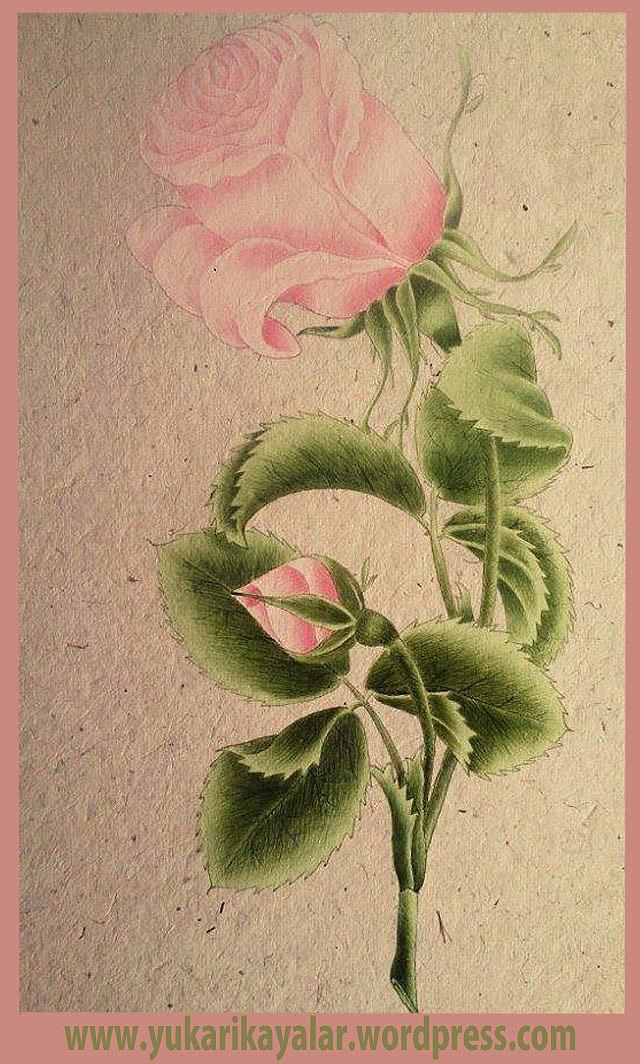 imam gazali,kimyayi saadet,rose-flower-wallpaper copy.jpgdop