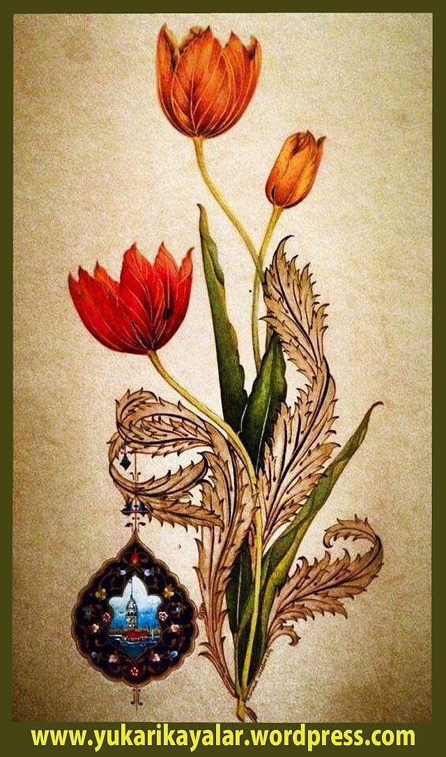 rose-flower-wallpaper copy.jpgytew