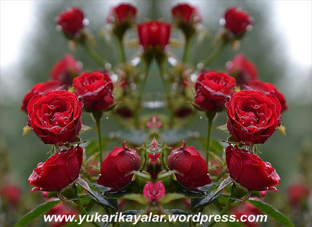 20120603_194237 copy (2)