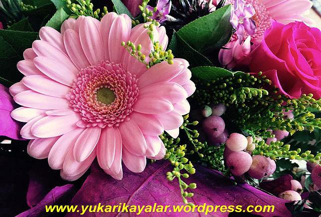 12048428_10153705968209421_957711961_n copy