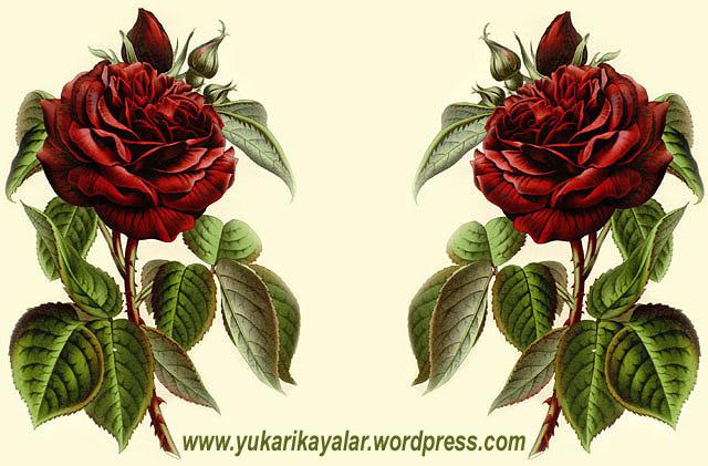 muslumaniyi-insandinreligionmuslimislamicniceflowerrosa
