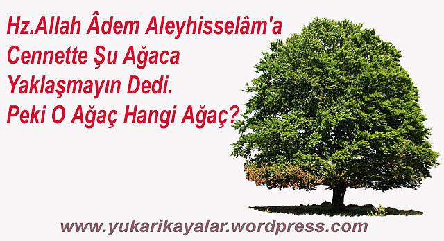 hz-allah-adem-aleyhisselama-cennette-su-agaca-yaklasmayin-dedi-peki-o-agac-hangi-agac