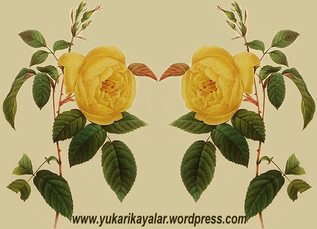 20120603_v194237-copy
